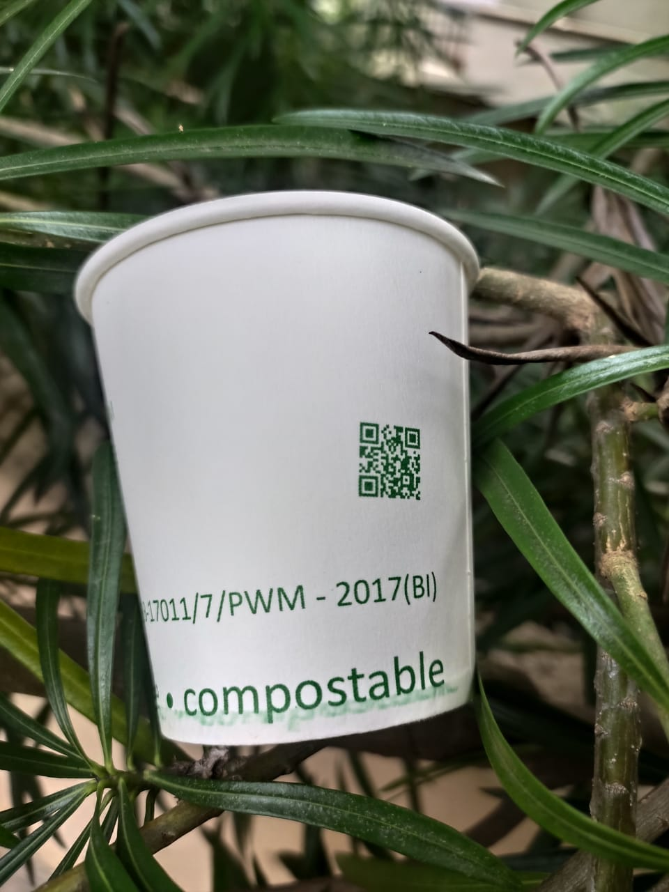 Compostable Paper Cups